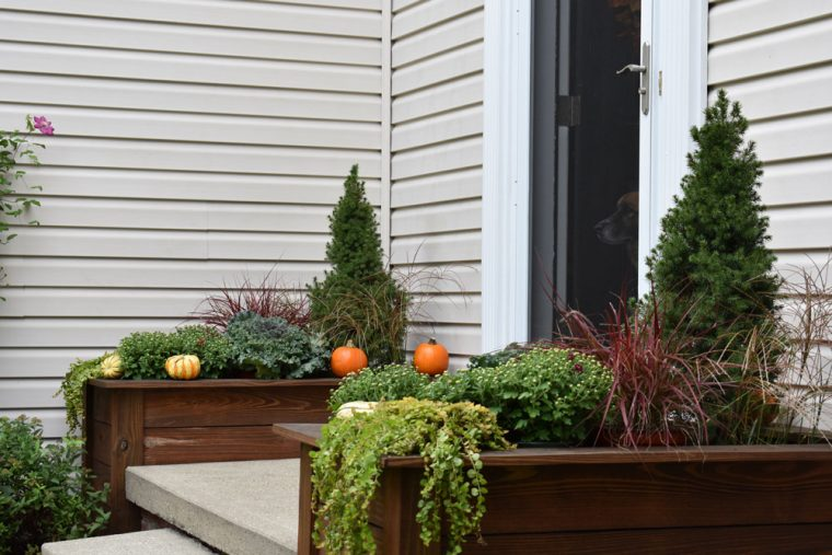 Fall plants in wooden planter boxes.
