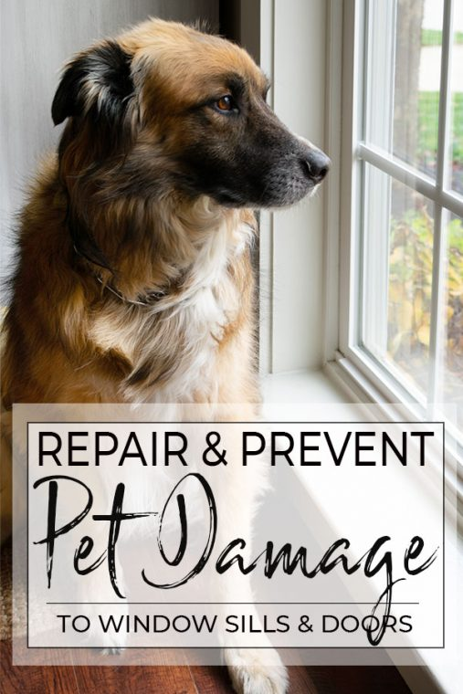 Repair and Prevent Pet Damage