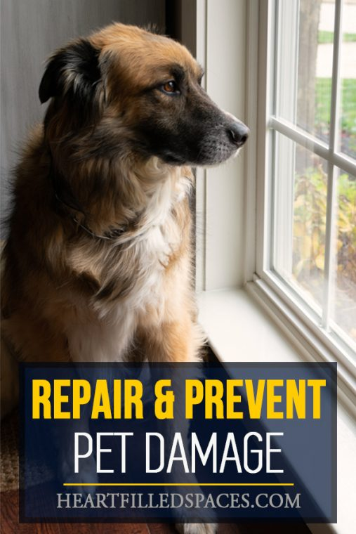 Repair and Prevent Pet Damage to Window Sills and Doors
