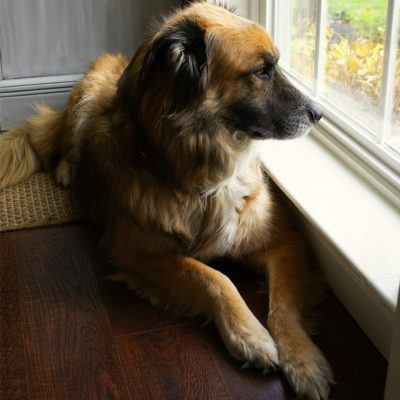 How to Prevent and Repair Pet Damage to Window Sills, Doors and Furniture.