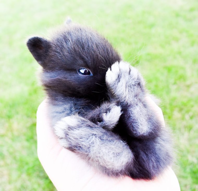 Cute bunny photos used to create free printables.