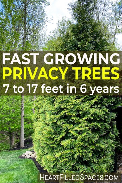Fast growing privacy trees for backyard privacy.