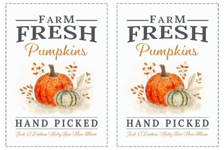 Signe de citrouille d'automne imprimable, PDF, SVG 5 X 7, 8 X 10, 8,5 X 11 tailles avec un signe de citrouille cueilli à la main de style ferme moderne pour la décoration de votre maison d'automne.